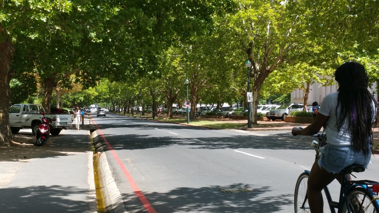 Street lined with Oak Trees